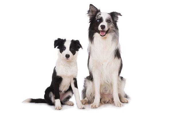 Wie mache ich mehr Umsatz mit Hundebedarf