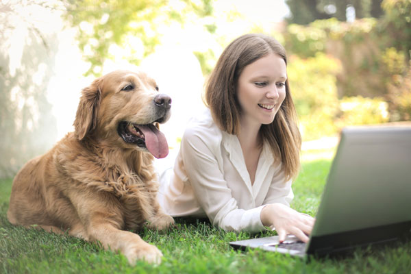 Geschäftsidee Onlineshop Tierbedarf