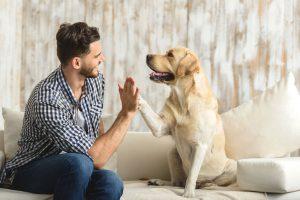 Mein eigenes Hunde Business