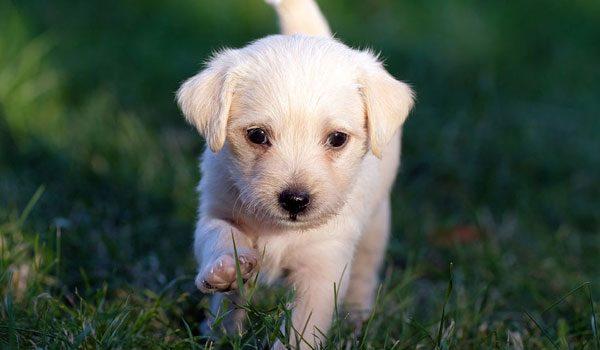 Schlüsselfertiger Onlineshop Tierbedarf
